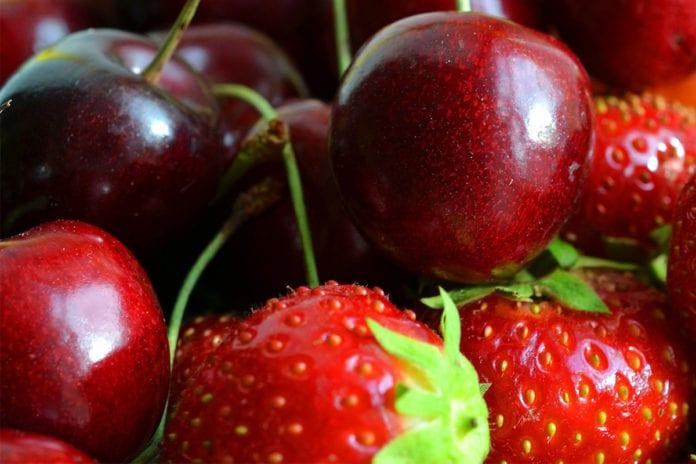 Erntezeit_Kirschen_Erdbeeren_selber_pfluecken